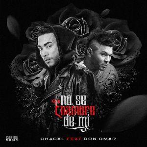 Chacal Ft. Don Omar - No Se Enamore De Mi MP3